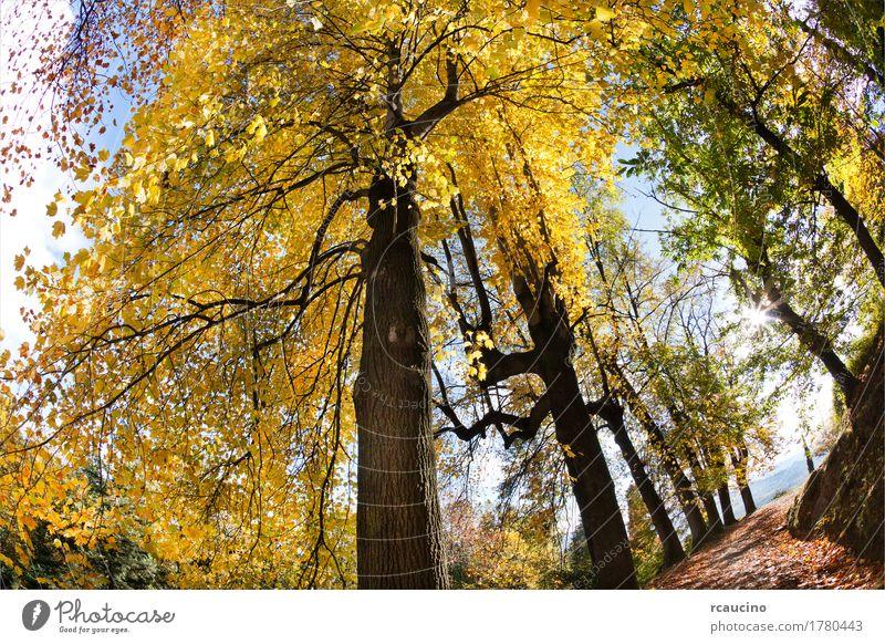 Laubbaumwald in der Herbstsaison Sommer Natur Landschaft Pflanze Baum Wald gelb grün farbenfroh horizontal viele Wildnis Außenaufnahme Menschenleer