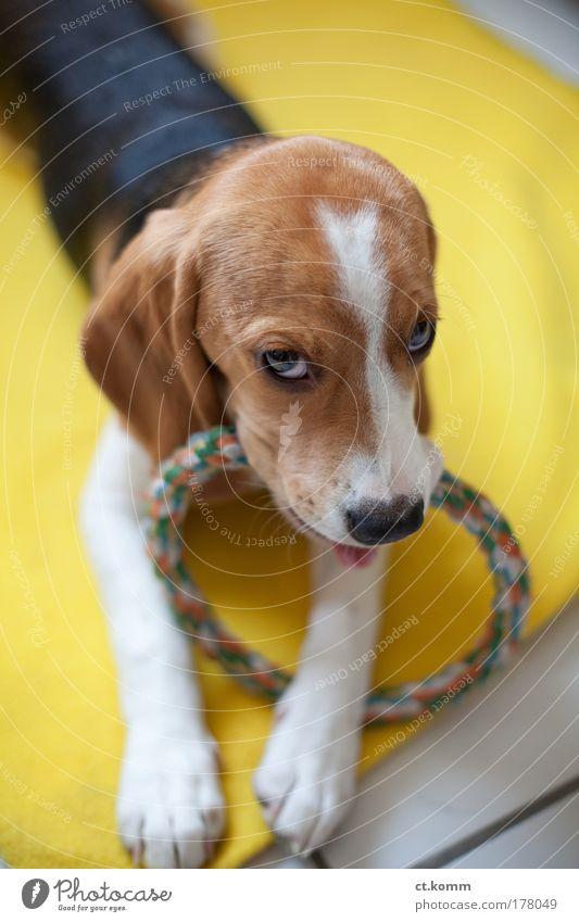 Zeitlose Stunden - Timeless hours weiß schön Hund Tier schwarz gelb Spielen Gefühle Glück braun Zufriedenheit Tierjunges glänzend natürlich Warmherzigkeit dünn