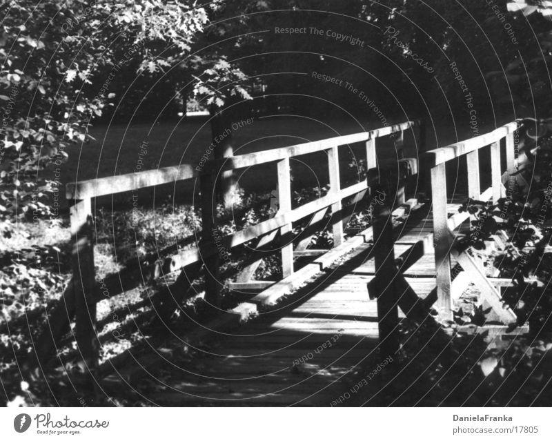 Wohin des Weges? Holz Wald Schwarzweißfoto Brücke Wege & Pfade Natur Schatten Sonne