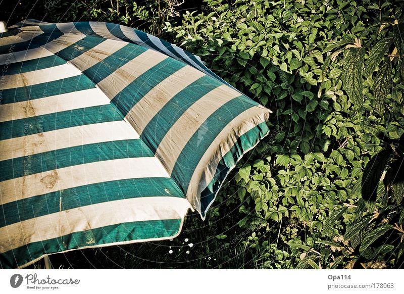 Sonnenschutz Natur Pflanze Sommer ruhig Erholung Freiheit Garten träumen Wetter Sträucher Dekoration & Verzierung Sonnenbad Schönes Wetter Sonnenlicht