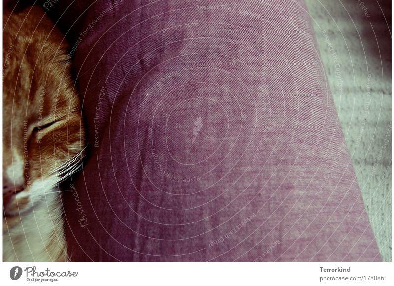 Sonntags.schnurren. Auge Erholung Katze Wärme schlafen Bett liegen Decke Müdigkeit Bettdecke