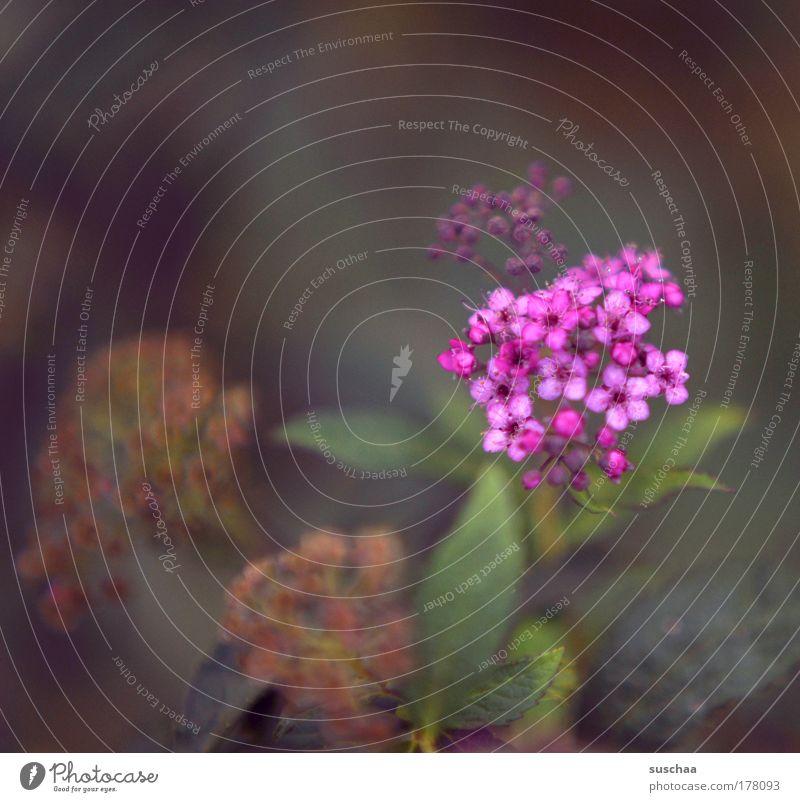 mädchenfoddo Natur Blume Pflanze Sommer Blüte Stimmung Sträucher Idylle Lupe Grünpflanze