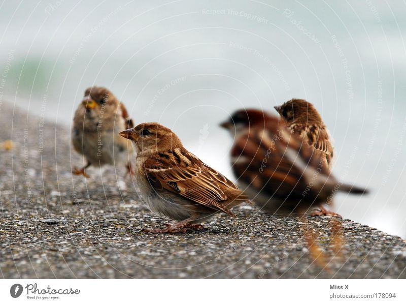 Ins Bild gehüpft Natur Sommer Freude Tier Umwelt klein Garten Freundschaft Park Vogel Zusammensein fliegen Wildtier Geschwindigkeit Flügel Tiergruppe
