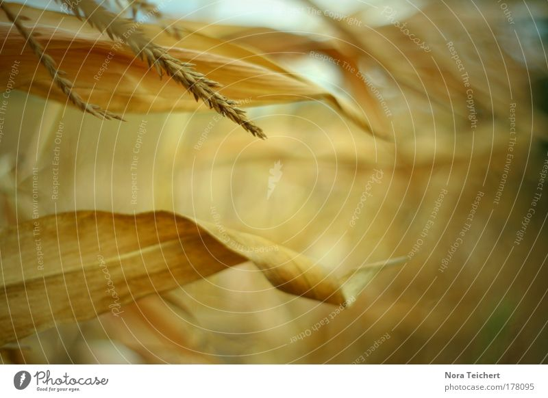 Herbstgold Farbfoto Gedeckte Farben Außenaufnahme Nahaufnahme Detailaufnahme Experiment abstrakt Menschenleer Tag Licht Schatten Lichterscheinung Sonnenlicht