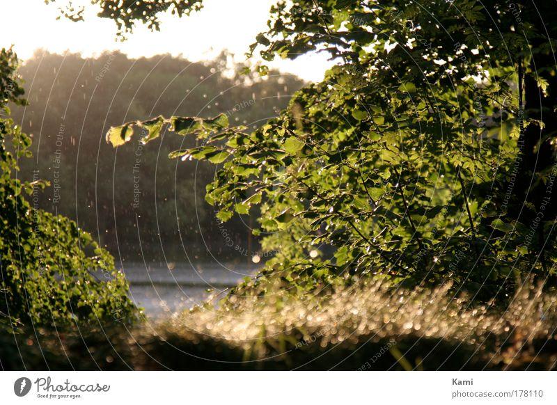 nur kurz gewaschen Natur Wasser Himmel Baum Sonne Pflanze Sommer Ferien & Urlaub & Reisen ruhig Blatt Wald Gras Garten See Regen Luft