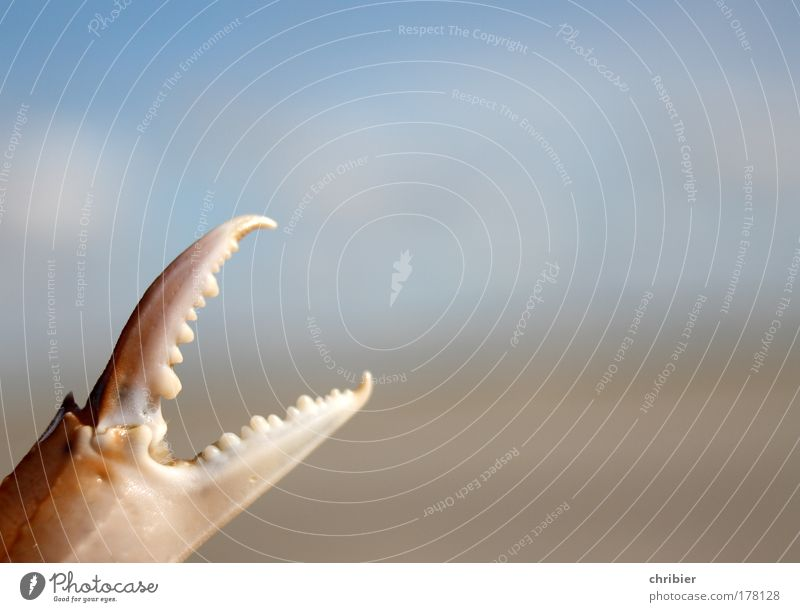 Strandwaffe Nahaufnahme Detailaufnahme Makroaufnahme Textfreiraum rechts Ferien & Urlaub & Reisen Sommer Meer Tier Sand Wasser Küste Korallenriff Nordsee fangen