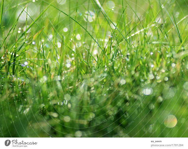 Tropfensymphonie Gesundheit Leben harmonisch Sinnesorgane Camping Sommer Natur Pflanze Urelemente Wasser Wassertropfen Frühling Gras Blatt Halm Wiese Garten