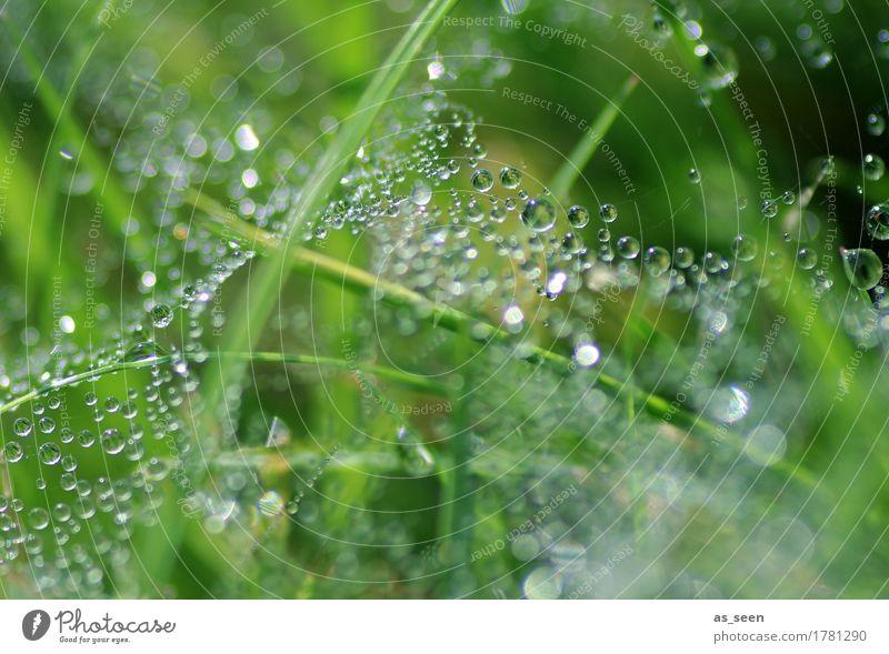 Glitzergespinst schön Wellness Leben Spa Garten Umwelt Natur Urelemente Wasser Wassertropfen Frühling Sommer Klima Wetter Regen Pflanze Gras Graswiese Halm