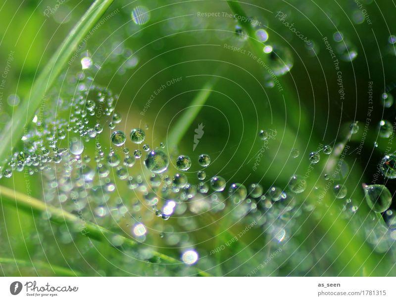 Perlenspiel elegant schön Leben harmonisch Spa Umwelt Natur Pflanze Wasser Wassertropfen Frühling Sommer Klima Regen Gras Halm Garten glänzend hängen frisch