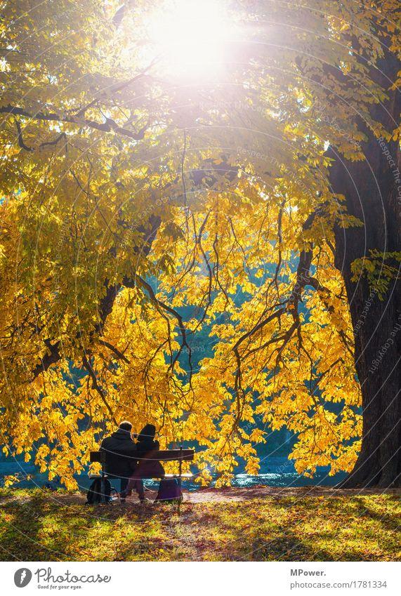 zusammen Freizeit & Hobby Mensch Freundschaft Paar Partner Leben 2 18-30 Jahre Jugendliche Erwachsene hell Herbst Laubbaum gold Eichenblatt Park Parkbank Liebe