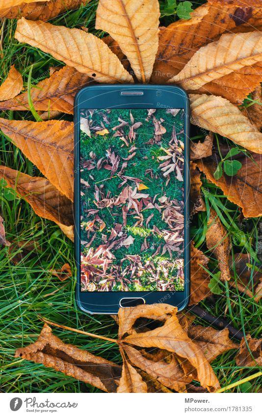 smarter herbstbeginn Handy Hardware High-Tech Telekommunikation Internet Umwelt Wiese Idylle Blatt PDA Fotografie Fotokamera Bildschirm Fotografieren Gras