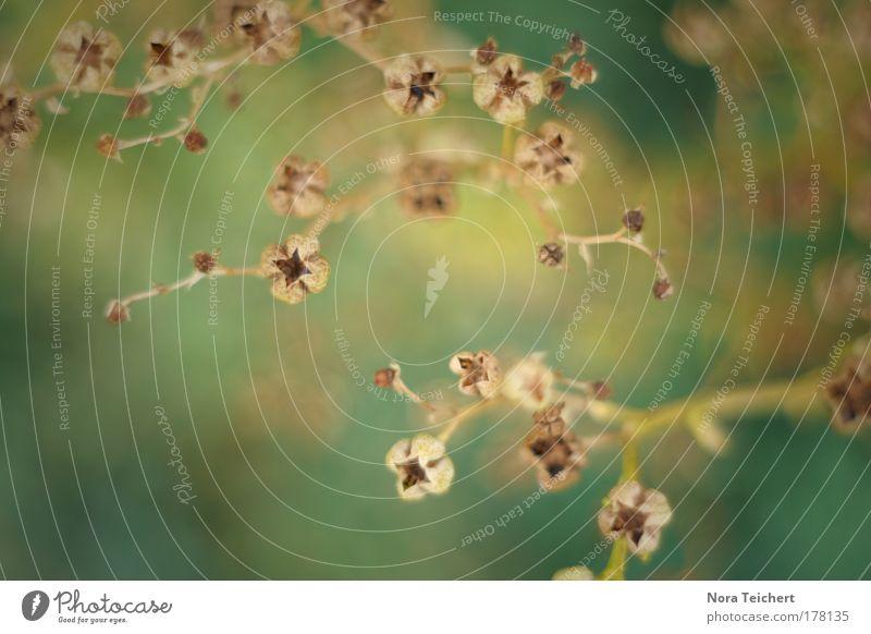 Verzweigt I Natur schön Pflanze Sommer Tier Blüte Glück Park Landschaft Umwelt Fröhlichkeit ästhetisch Sträucher Vertrauen einzigartig Wunsch