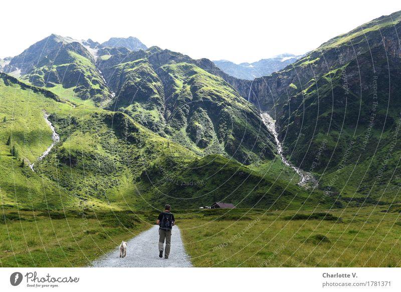 Auf Wanderschaft Mensch Hund Natur Mann Sommer grün Landschaft Tier Ferne Berge u. Gebirge Erwachsene Gras gehen maskulin leuchten wandern