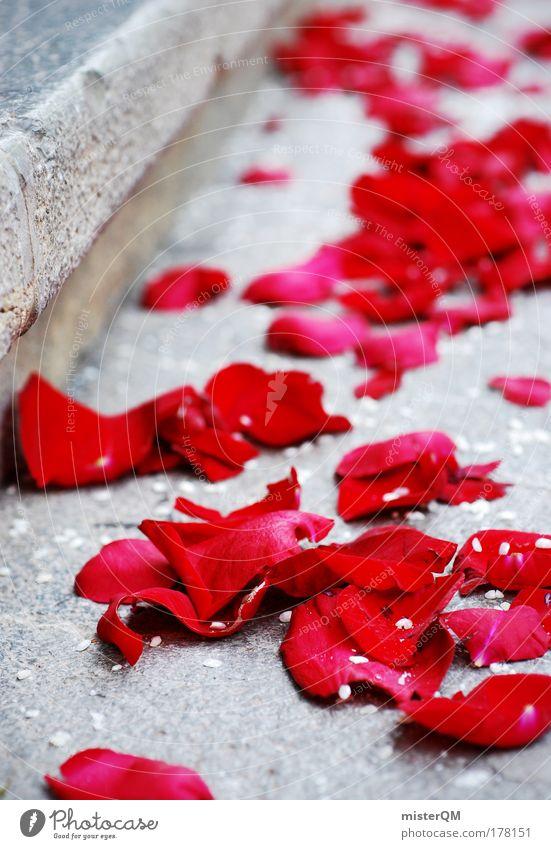 Wedding. rot Blüte Feste & Feiern Zusammensein Geburtstag Treppe Kirche Romantik Rose Kitsch Zeichen Makroaufnahme Veranstaltung Tradition Blütenblatt Jubiläum