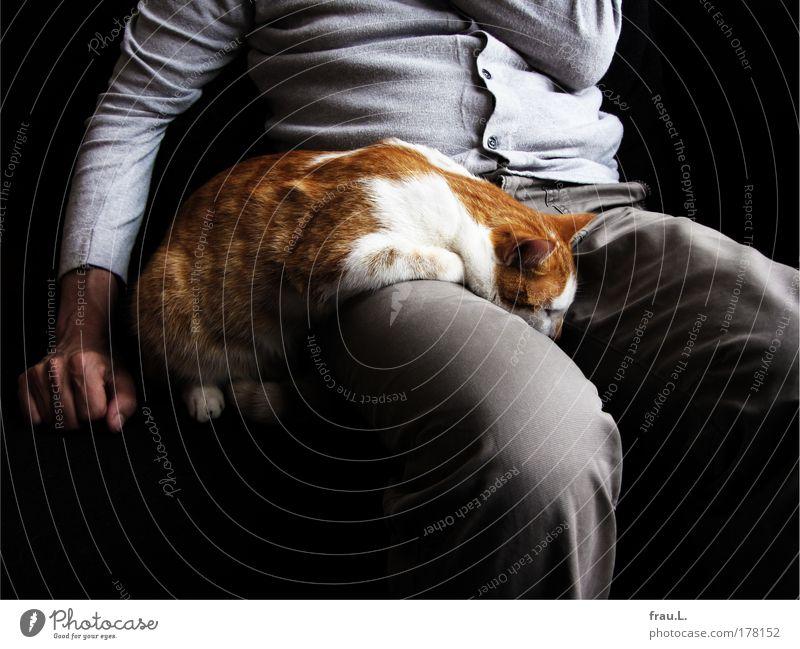eingeschlafen Farbfoto Innenaufnahme Tag maskulin Mann Erwachsene Arme Hand Bauch Beine Tier Haustier Katze 1 berühren genießen liegen sitzen Zusammensein