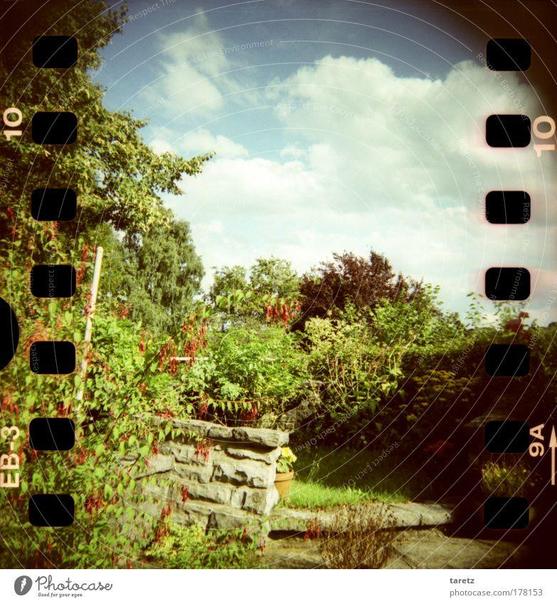 Sommer auf der Terasse Natur grün blau Pflanze rot Wolken Erholung Garten Zufriedenheit Stimmung Wohnung Freizeit & Hobby Häusliches Leben Lebensfreude Duft