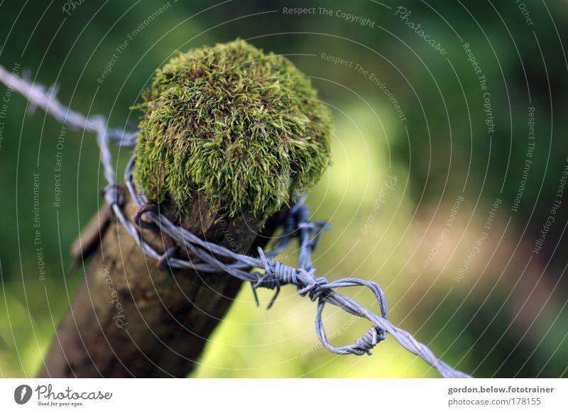 hinter Stacheln Farbfoto Außenaufnahme Menschenleer Textfreiraum rechts Tag Schwache Tiefenschärfe Vogelperspektive Natur Tier Sommer Pflanze Baum Moos Feld