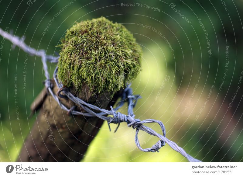 hinter Stacheln Natur alt grün Baum Pflanze Sommer Tier Umwelt gelb Holz Wege & Pfade Feld natürlich Verfall Moos Optimismus