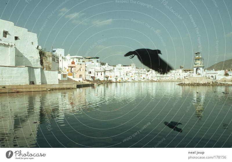 Pushkar – Stadtmitte Ferien & Urlaub & Reisen Traurigkeit Freiheit dreckig Armut Kultur einzigartig Vergänglichkeit historisch Seeufer Glaube Städtereise Taube