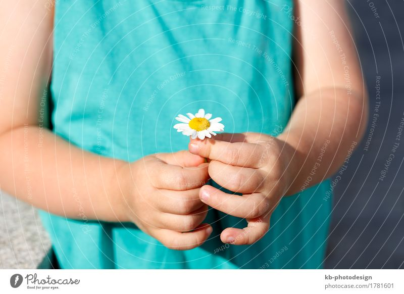 Small girl holds beautiful daisy into the camera Kind Pflanze Sommer schön Hand Mädchen gelb Kleinkind 1-3 Jahre