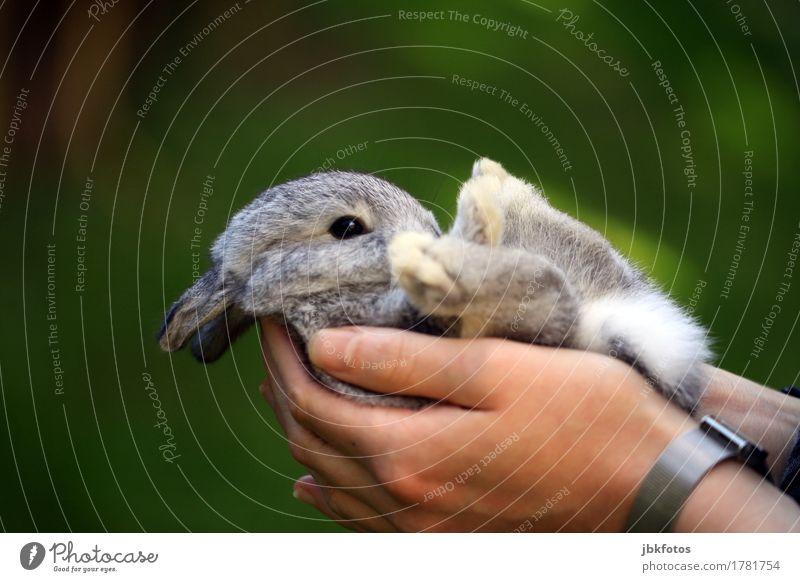 Entspannung pur Natur grün schön Hand Tier Tierjunges Umwelt natürlich feminin klein Glück Lebensmittel wild Uhr Ernährung elegant
