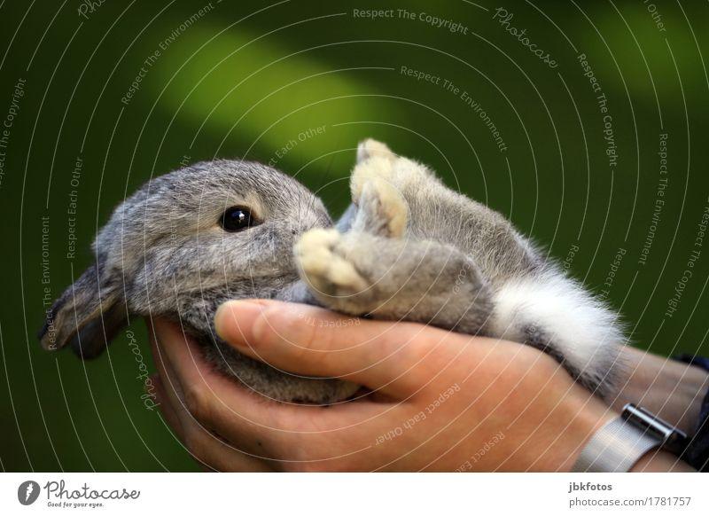 Kuscheltier Lebensmittel Ernährung Umwelt Natur Tier Haustier Nutztier Hase & Kaninchen Tierjunges Fröhlichkeit Glück schön einzigartig kuschlig niedlich