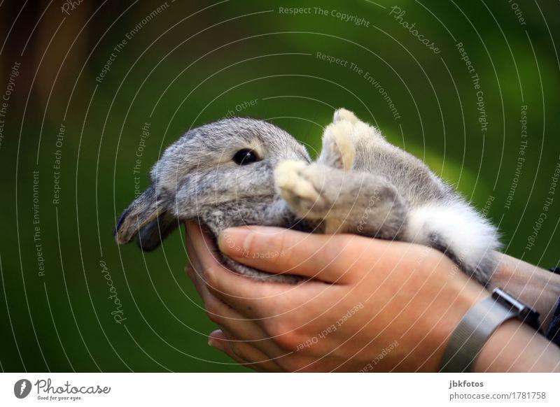 Frohes Fest euch allen Lebensmittel Ernährung Umwelt Natur Tier Haustier Nutztier Wildtier Tiergesicht Fell Krallen Pfote Hase & Kaninchen Tierjunges Freude