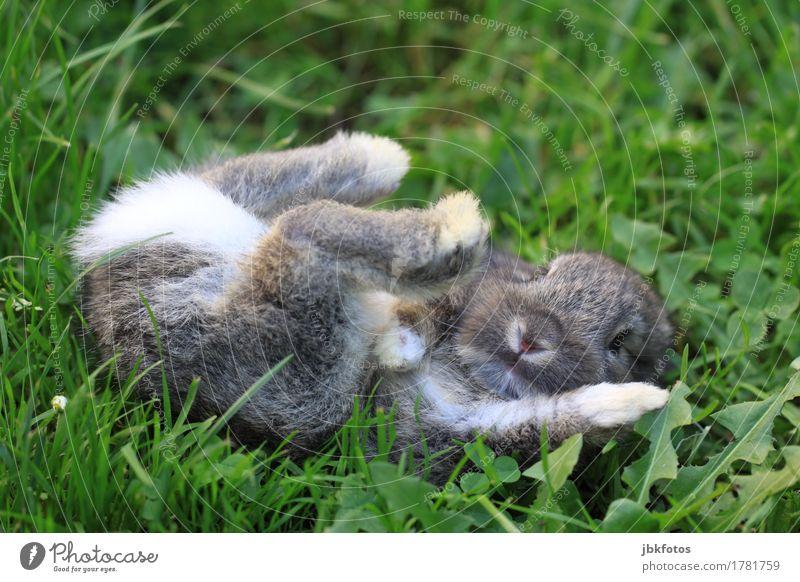 Ist etwa schon Freitag? Lebensmittel Ernährung Umwelt Natur Tier Garten Park Wiese Haustier Nutztier Wildtier Tiergesicht Fell Krallen Pfote Hase & Kaninchen