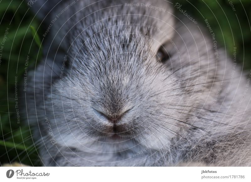 Internationaler Tag des Hasen Lebensmittel Ernährung Tier Haustier Nutztier Wildtier Tiergesicht Fell Hase & Kaninchen Zwergkaninchen Tierjunges Freude Glück