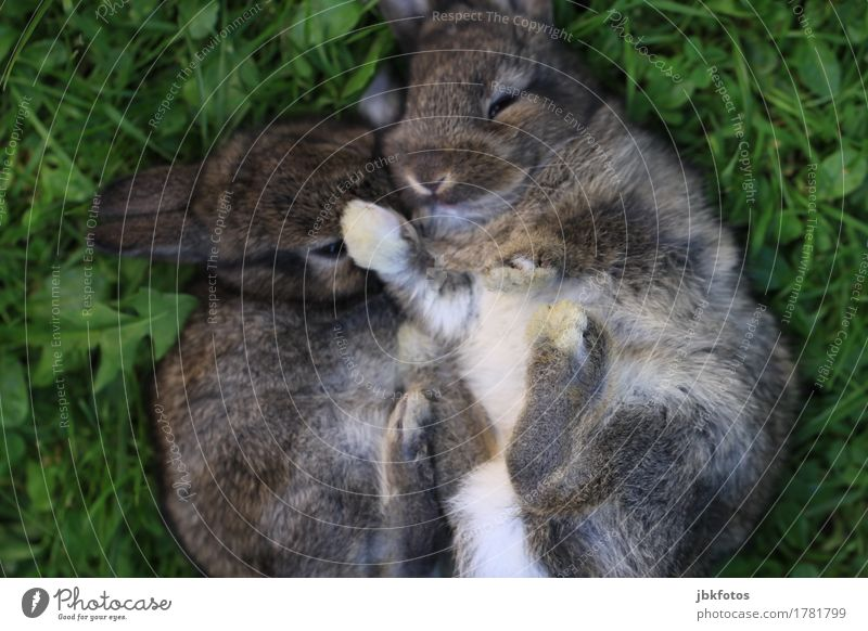 endlich F R E ! T A G !!! Lebensmittel Fleisch Ernährung Umwelt Natur Tier Haustier Nutztier Wildtier Tiergesicht Fell Krallen Pfote Hase & Kaninchen