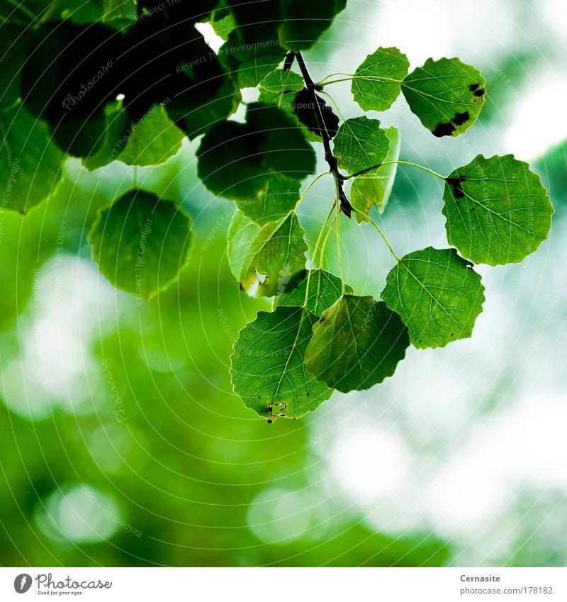 Natur Pflanze grün schön weiß Blatt Wiese hell wild Feld modern authentisch ästhetisch einfach weich Schönes Wetter