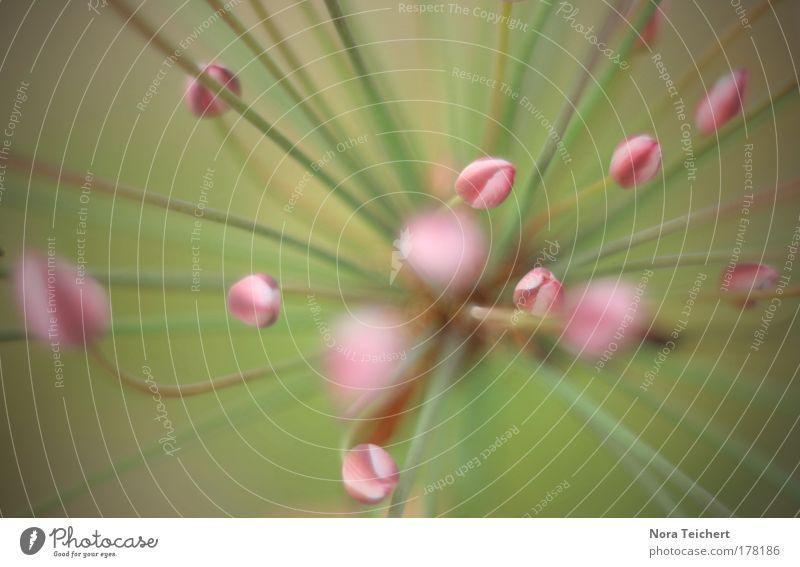 Kopf hoch II Natur Pflanze schön Sommer Landschaft Tier Umwelt Blüte Stimmung rosa Feld Wachstum Sträucher Fröhlichkeit ästhetisch Blühend