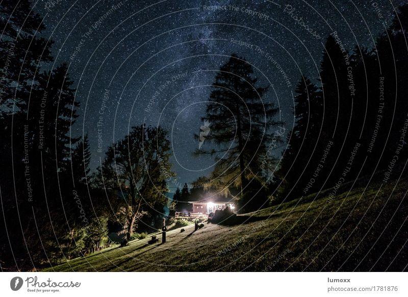 getaway Himmel Natur Sommer grün Baum Einsamkeit schwarz träumen Schönes Wetter Hütte Nachthimmel Sternenhimmel Nadelbaum Galaxie Traumhaus Milchstrasse