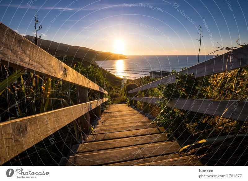 follow the light Landschaft Himmel Sonne Sonnenlicht Sommer Schönes Wetter Pflanze Küste Strand Meer blau gold Neuseeland Treppe Treppengeländer Sonnenuntergang