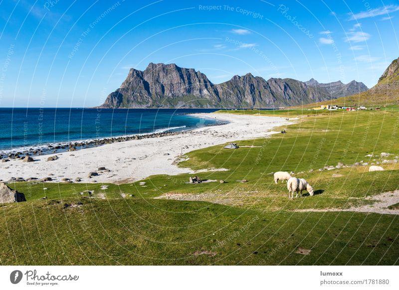 above the arctic circle Himmel Natur blau grün Landschaft Meer Tier Strand Umwelt Küste gold Schönes Wetter exotisch Schaf paradiesisch Norwegen