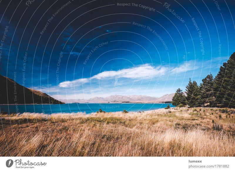 fernweh Himmel Natur blau Sommer Wasser Landschaft Wolken Gras See braun träumen Schönes Wetter Seeufer Fernweh Neuseeland Australien + Ozeanien