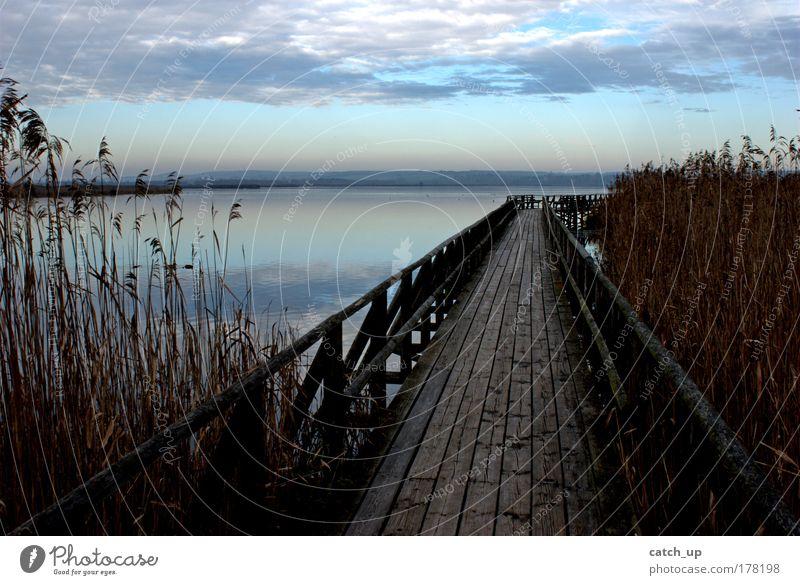 hope Farbfoto Außenaufnahme Menschenleer Morgen Kontrast Natur Landschaft Wasser Himmel Wolken Seeufer Moor Sumpf Federsee Optimismus Frieden Hoffnung Steg