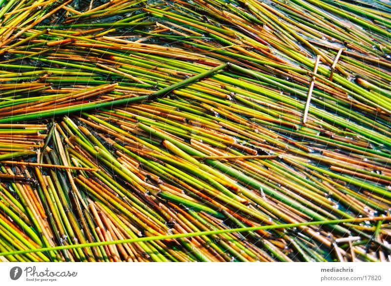 Seegras Abtei Maria Laach Laacher See Gras Wasser Weide
