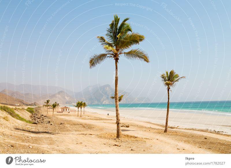 Palme und Berg in oman arabischem Meer der Hügel Ferien & Urlaub & Reisen Tourismus Sommer Sonne Strand Kultur Umwelt Natur Landschaft Pflanze Sand Himmel
