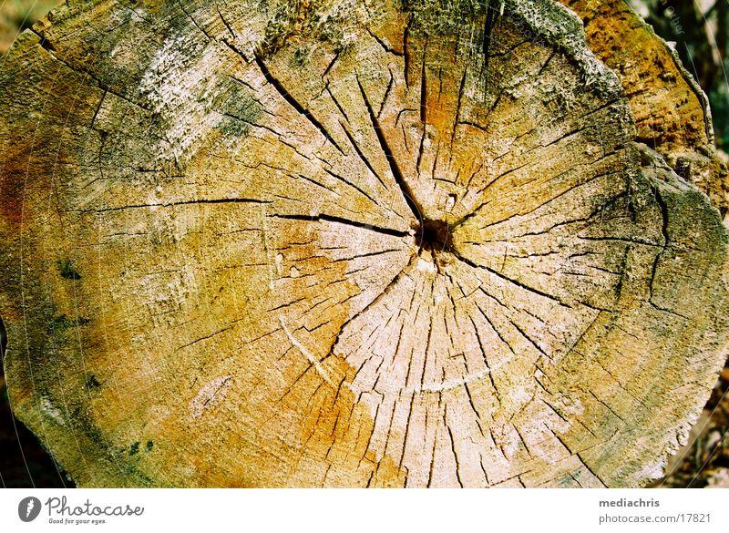 Jahresringe Holz Baum Baumstamm alt Riss Färbung Oberfläche Querschnitt Nahaufnahme
