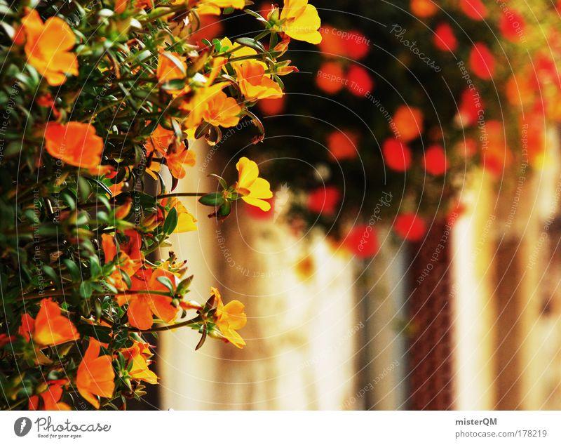 Spanish Flair. Natur schön Blume Pflanze Sommer Ferien & Urlaub & Reisen gelb Gefühle Stil Garten Wärme orange Wachstum Italien Häusliches Leben Café
