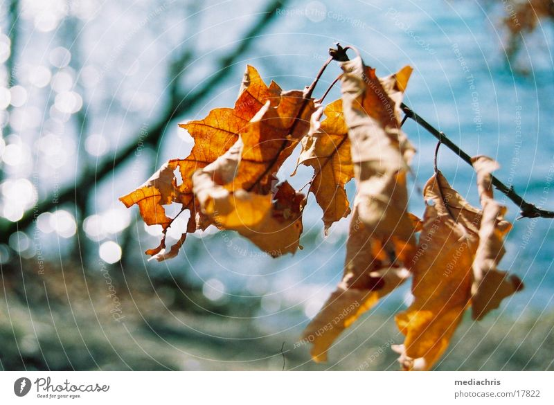 Blätterrascheln Blatt See welk Abtei Maria Laach Laacher See