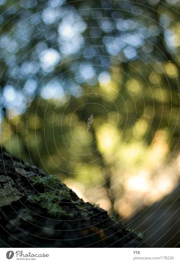 Ohne Moos nix los Natur Himmel Baum grün blau Pflanze Sommer gelb Wald dunkel kalt Stimmung Beleuchtung glänzend Umwelt Warmherzigkeit