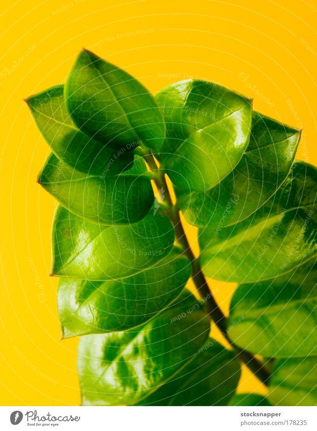 Natur grün Pflanze Blatt gelb natürlich Wachstum Ast dick aufwärts Gartenarbeit Entwicklung