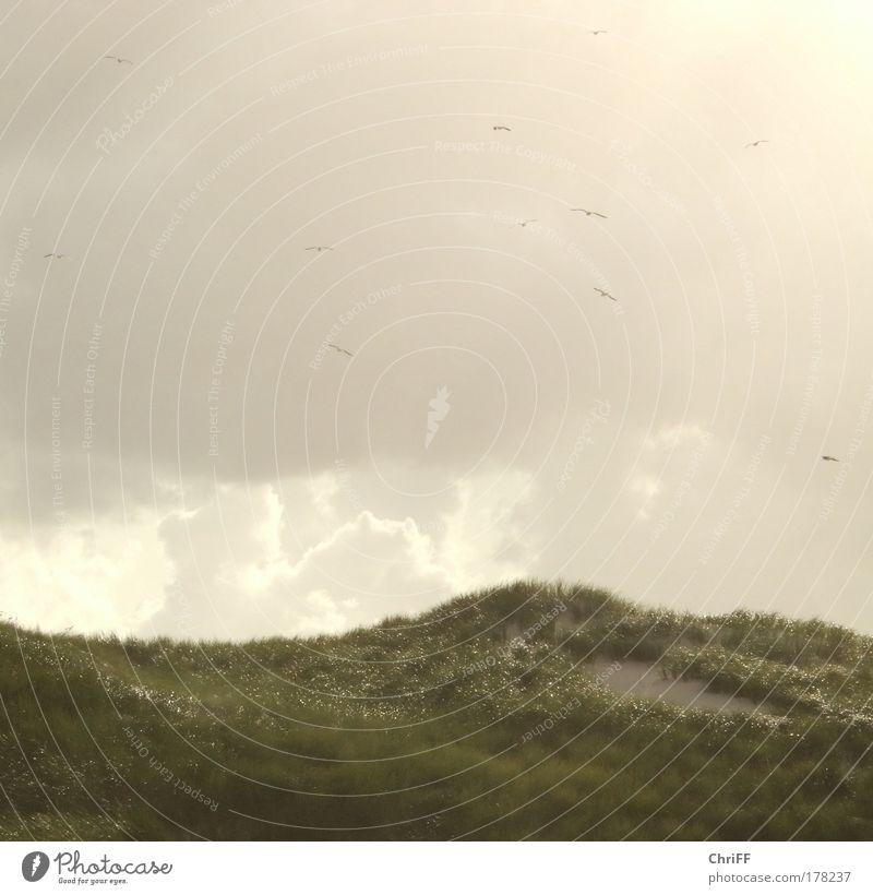 Frei wie Vögel im Wind Natur Ferien & Urlaub & Reisen Sommer Strand Einsamkeit Wolken ruhig Erholung Wiese Freiheit Glück Traurigkeit Sand Vogel Stimmung Wind