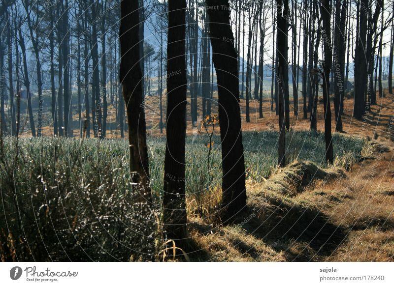 bäumig Umwelt Natur Landschaft Pflanze Baum Gras Indonesien Java Asien ästhetisch nachhaltig natürlich braun Stimmung Tau Morgennebel Nebelschleier schemenhaft