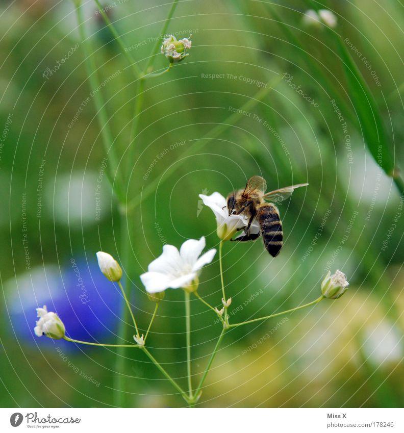Summsel Natur Blume Pflanze Ernährung Tier Wiese Blüte Gras Park Feld klein Umwelt fliegen Flügel Insekt Tierporträt