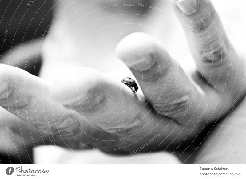 Fertigmachen zum Abflug! Hand Strand Tier Leben Freiheit klein Arme Freizeit & Hobby Ausflug Finger Jagd Käfer Marienkäfer krabbeln Fingernagel Safari
