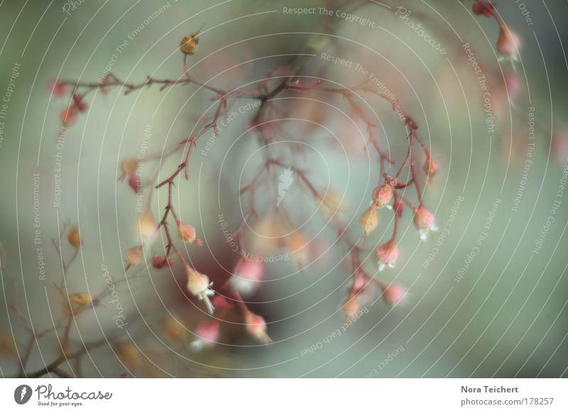 Ballett I Natur schön Pflanze Sommer Tier Einsamkeit Umwelt Spielen Freiheit Blüte träumen Tanzen rosa Tanzveranstaltung verrückt ästhetisch