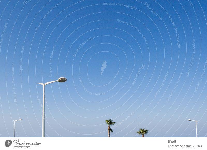 Die zwei Neuen sind nicht so die Leuchten Himmel Ferien & Urlaub & Reisen Lampe Freiheit stehen einfach dünn beobachten einzigartig Neugier Laterne Palme